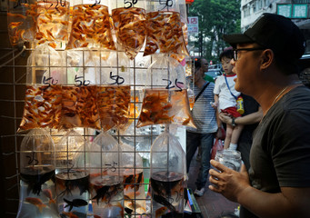 A boy checks tropical fishes in plastic bags on display for sale in Hong Kong