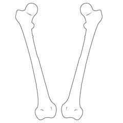 Femur Bone. Vector illustration-1