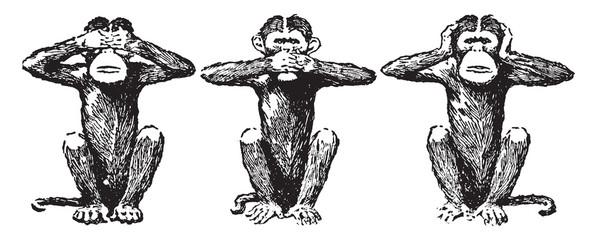 Three Wise Monkeys, vintage illustration.