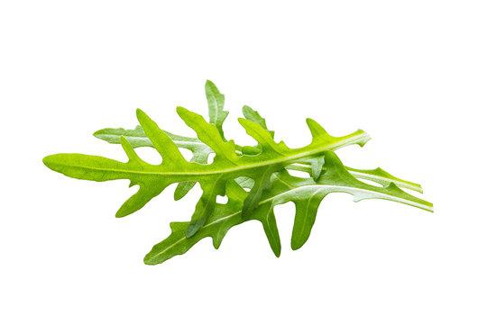 Arugula leaves isolated on white background.