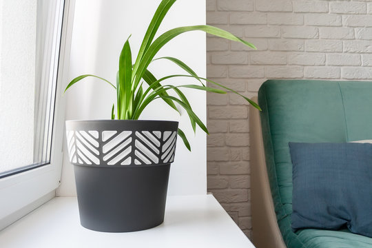 A green plant in a black and white flower pot stands on a clean white windowsill in a modern living room. The room has a wall of white decorative bricks, a green soft sofa and a gray pillow on it