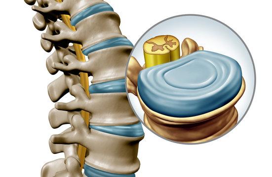 Human Spine Disk Anatomy
