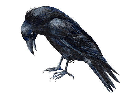 halloween, black raven on an isolated white background, watercolor illustration, clipart