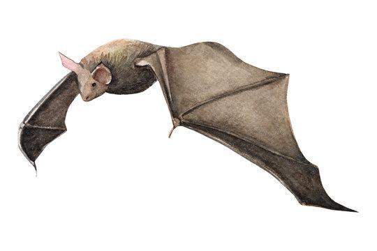 halloween postcard, bat raven watercolor illustration, clipart