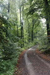 Fotorollo Eisenbahnschienen Waldweg bei Sonnenschein und spätsommerlichen Tag