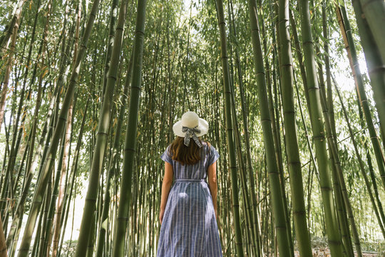 Rear view of woman standing bamboo forest