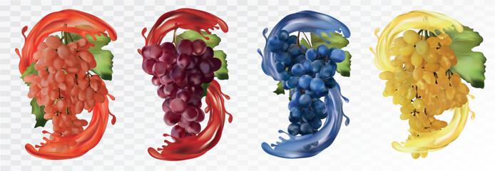 Set wine grapes. Table grapes white,red,dark blue with splash. Grapes on transparent background. Fruit and splashes. Vector illustration Fototapete