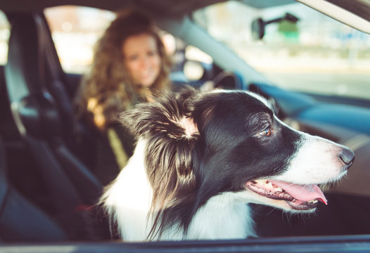 Woman with dog sitting in car