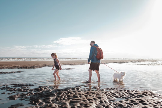 Man and young girl walking small dog on the beach