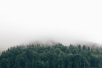 fog in the forest Fototapete