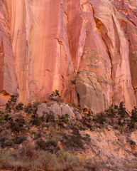 Sandstone Wall, Tiny Tree, Capitol Reef