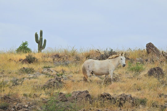 Wild Horse off highway 80, Sonoran Desert, Arizona.