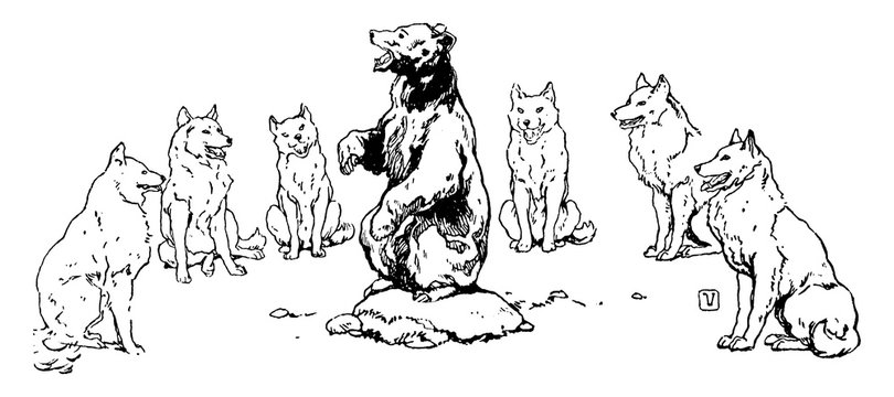 Baloo Singing to Wolves, vintage illustration
