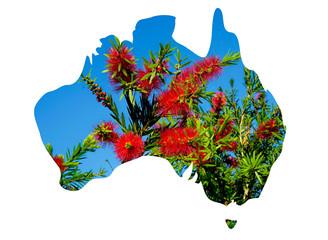 Australia map and Bottle brush flowers