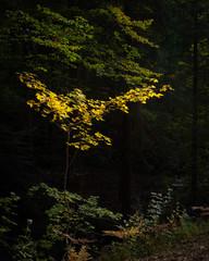 Herbst im Naturpark Schönbuch