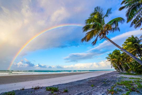 Rainbow on a beach with palm trees