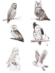 Wall Murals Owls cartoon Set of owls, six cute owls