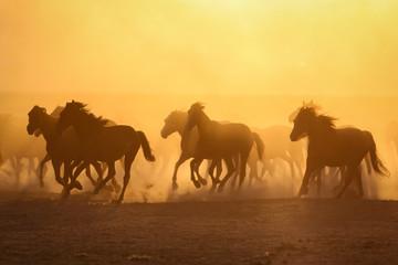 Fotobehang Meloen Yilki Horses Running in Field, Kayseri, Turkey