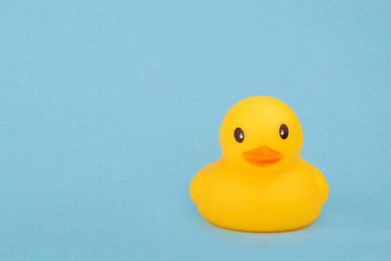 bath yellow rubber duck on blue background