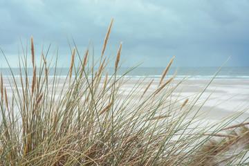 Fototapete - Dünenlandschaft an der Nordseeküste