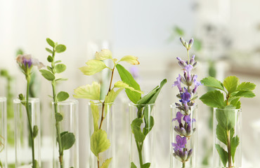 Fototapete - Closeup view of test tubes with different plants on blurred background