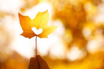Woman holding sunlit leaf with heart shaped hole outdoors, closeup. Autumn season Fototapete