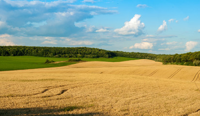 Foto auf Leinwand Pool beautiful landscape panoramic view of wheat field, ears and yellow and green hills