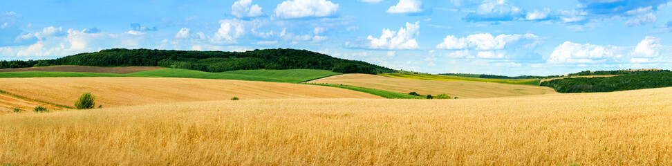 Tuinposter Landschappen beautiful landscape panoramic view of wheat field, ears and yellow and green hills