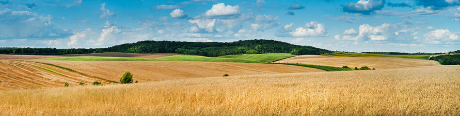 Poster Blauw big panoramic view of landscape of wheat field, ears and yellow and green hills