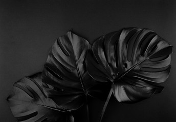 Shiny dark natural monstera leaves bouquet. Black Friday tropical banner, poster background template. Wall mural