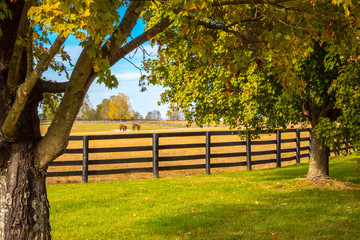 Canvas Prints Autumn Horses at horsefarm. Country autumn landscape.