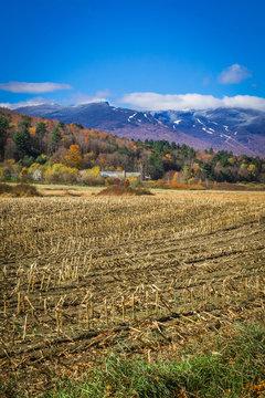 Mount Mansfield summit and ski resort Vermont USA  landscape with corn field