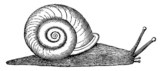 Helix, vintage illustration.