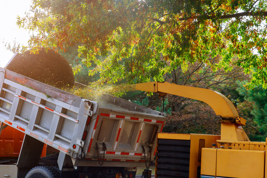 Wood chipper blowing tree branches cut a portable machine used for reducing wood into smaller wood chips.