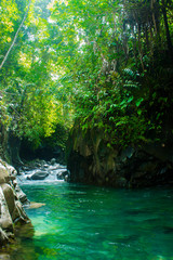 beauty light among tree in waterfall, green forest indonesia, green water river