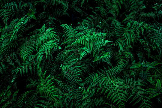 abstract green fern leaf texture, nature background, tropical leaf