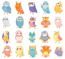 Slats personalizados com sua foto Cartoon owl. Cute color owls, forest birds and hand drawn baby owl. Owlet birdie characters, doodle baby owls expression. Isolated vector illustration icons set