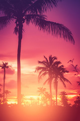 Wall Mural - Tropical palm tree on sunset sky cloud abstract background.