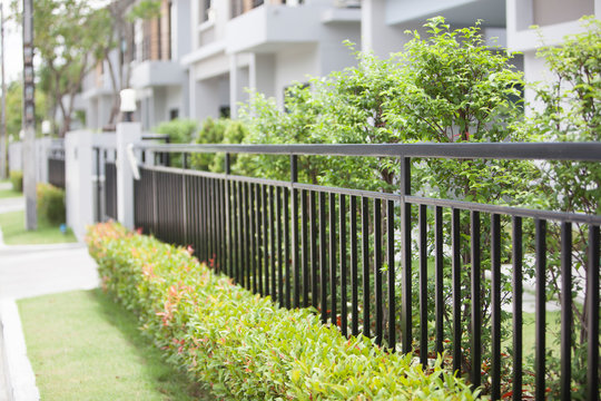 black fence with green tree