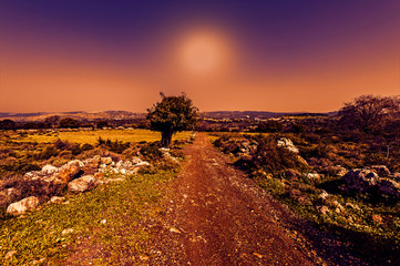The nature of the western Galilee