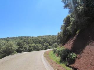 Bab Azhar Road Forest Morocco