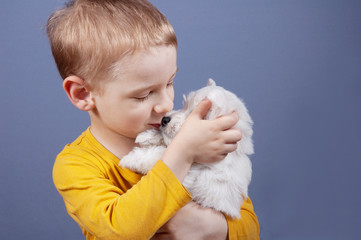 little boy with best friend white west highland terrier dog puppy, kiss, plays and smile on gray background