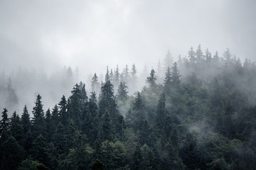 Foto op Canvas Grijze traf. Misty mountain landscape