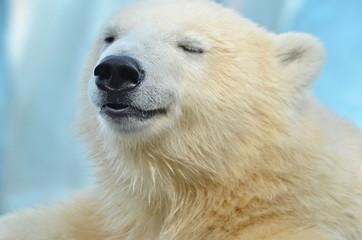 Deurstickers Ijsbeer polar bear