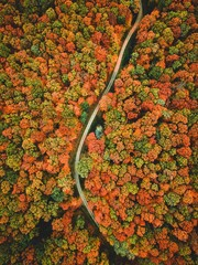 Aerial view of the road in the middle of the colorful autumn forest.