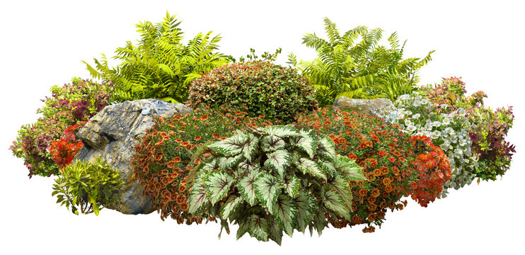 Cut out garden design. Flower bed isolated on white background. Flowering shrub and green plants for landscaping. Decorative shrub and boxwood hedge. High quality clipping mask