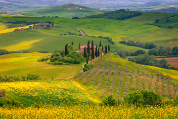 Fotomurales - Tuscany spring landscape, Italy, Europe