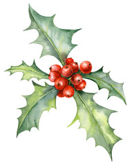 Watercolor illustration of holly plant with red berries. For Christmas or new year decoration.