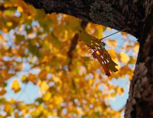 bella immagine di foglie autunnali che cambiano colore