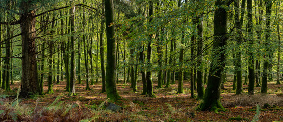 Woodland walk in the new forest in Autumn